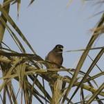 bird oman