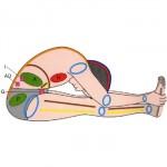 ayurvedische yoga therapie